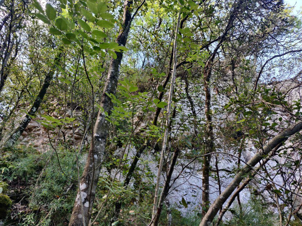 Rocca Accarina, la base della torre tra gli alberi